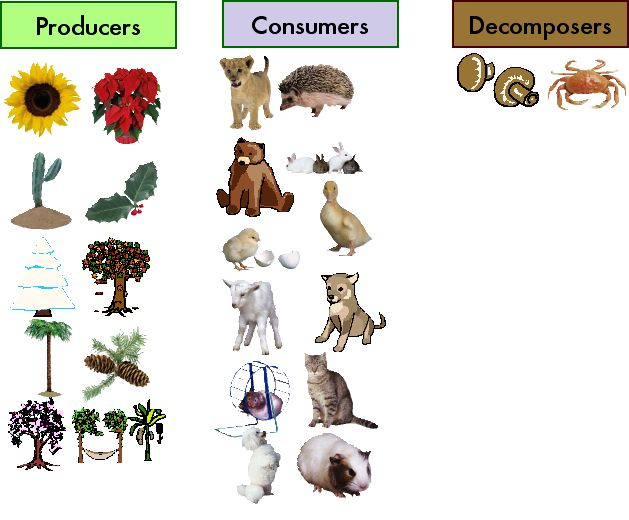 Desert Decomposers List Producers, Cons...